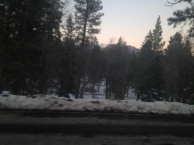 wondrous big bear trees