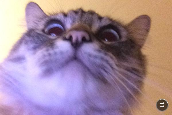 surprised cat by JoseRodriguezPeriod2