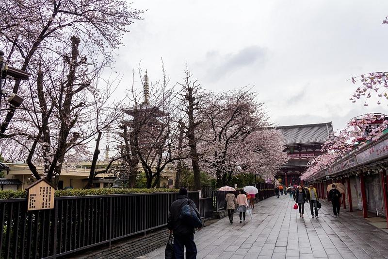 Japan2014-15