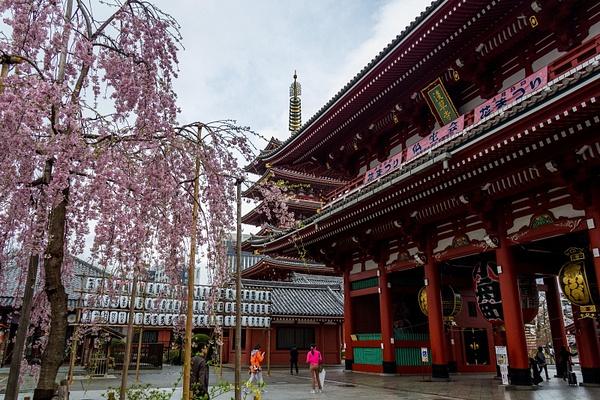 Japan2014-24 by DmitryKarmanov