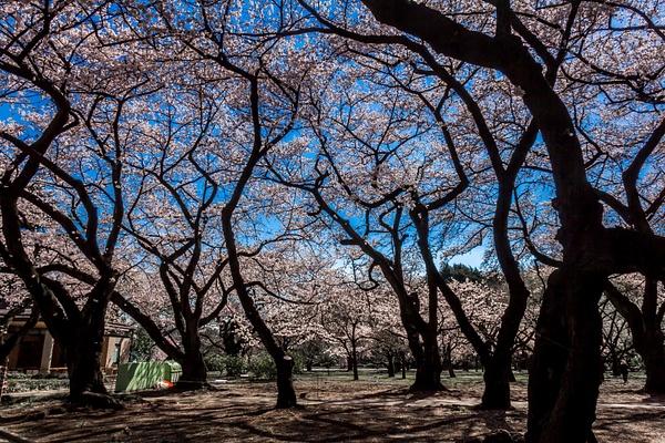 Japan2014-194 by DmitryKarmanov