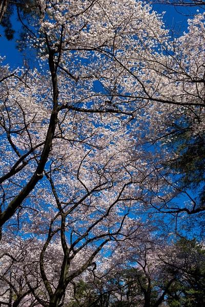 Japan2014-221 by DmitryKarmanov