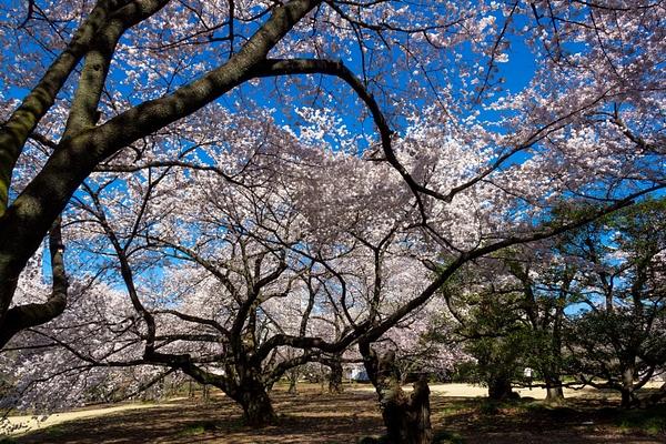 Japan2014-224 by DmitryKarmanov