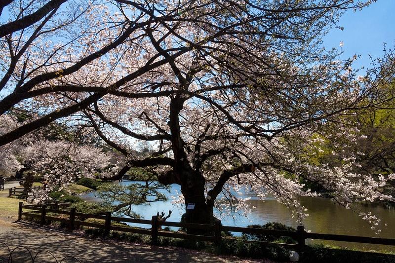Japan2014-239