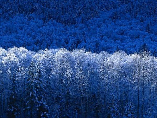 Winter by amazingGrace