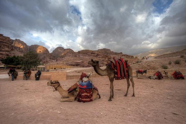 Petra Transit Authority by Aurelia