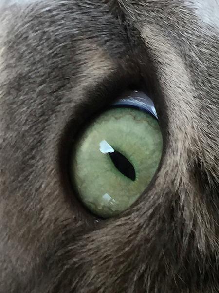 Eye of the Tiger by Aurelia