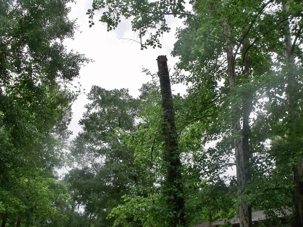 Storm damage 4-20-15 f