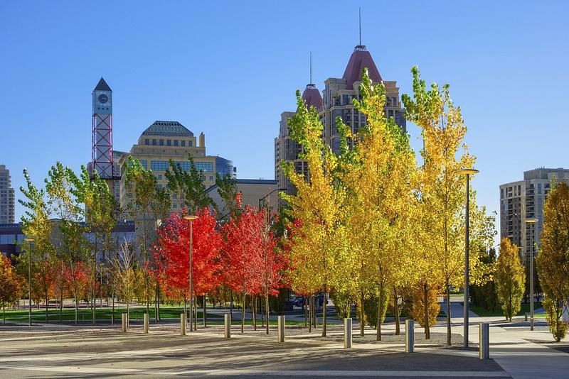 Toronto Notary – Basics You Need To Know