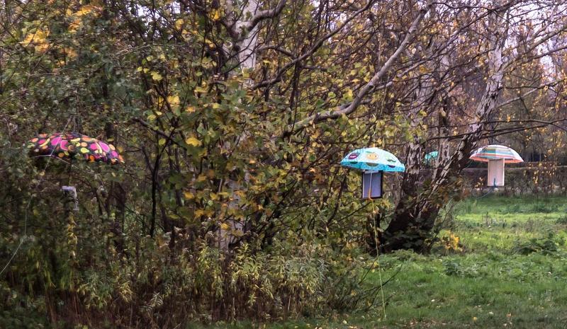 Paraply træer