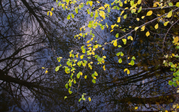 Spejlbilledet i vandet by LindaRiis