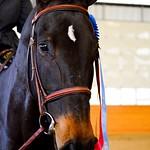 Low Adult Amateur Hunter Horse