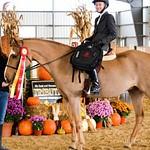 Pleasure Horse and Pony