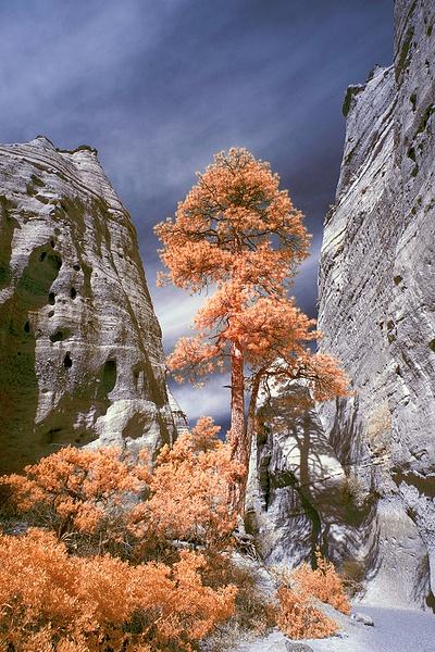 color IR - Santa Fe, NM - Tony Sweet