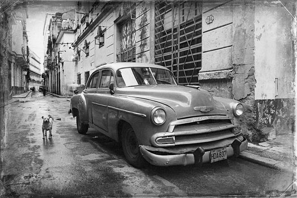 doggie - Cuba - Tony Sweet