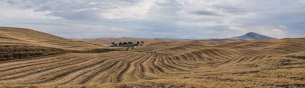 Harvest, Palouse, WA