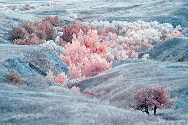 _DSF5805-Edit - Infrared - Tony Sweet