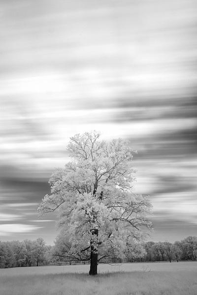 DSCF5011-Edit - Infrared - Tony Sweet