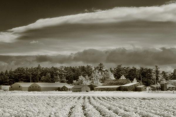 ebeys prairie farm 1 - Infrared - Tony Sweet
