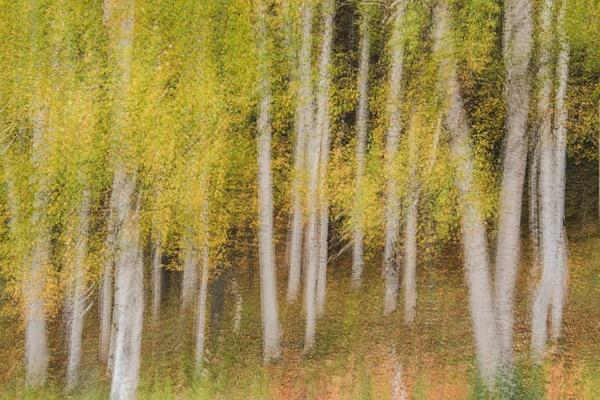 _DSC1029 - New Hampshire Fall - Tony Sweet