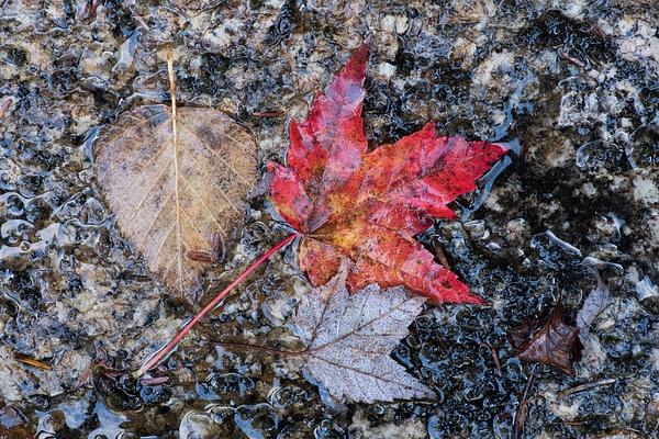 _DSC1130 - New Hampshire Fall - Tony Sweet