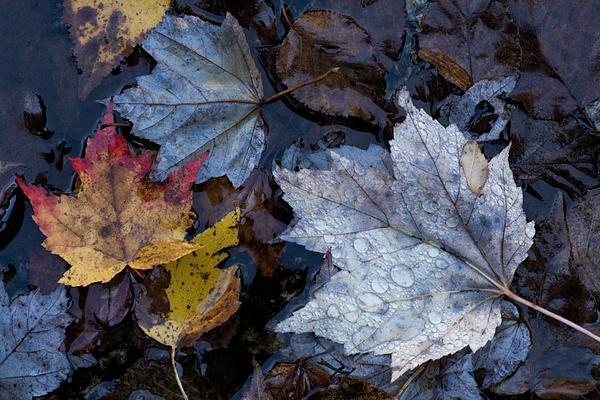 _DSC1133-Edit - New Hampshire Fall - Tony Sweet
