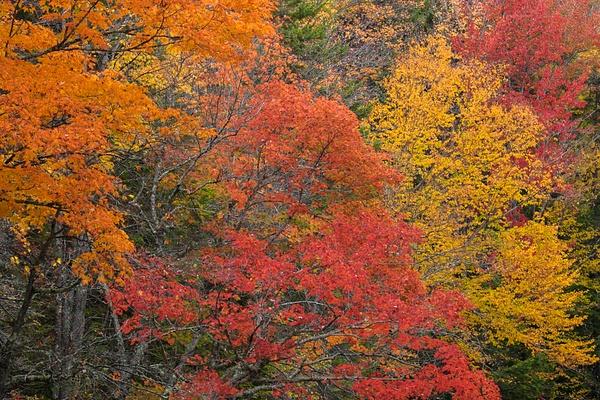 _DSF8012 - New Hampshire Fall - Tony Sweet