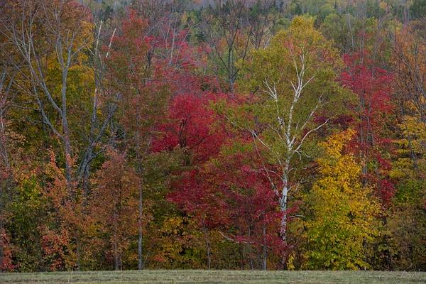 _DSC0973 - New Hampshire Fall - Tony Sweet