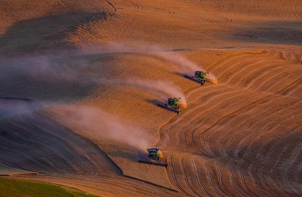 _DSF3597 - Palouse Harvest - Tony Sweet