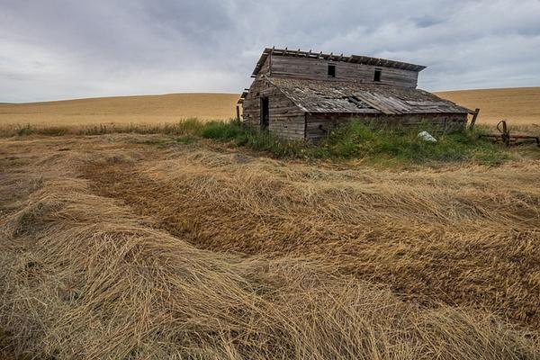 _DSF4534 - Palouse Harvest - Tony Sweet