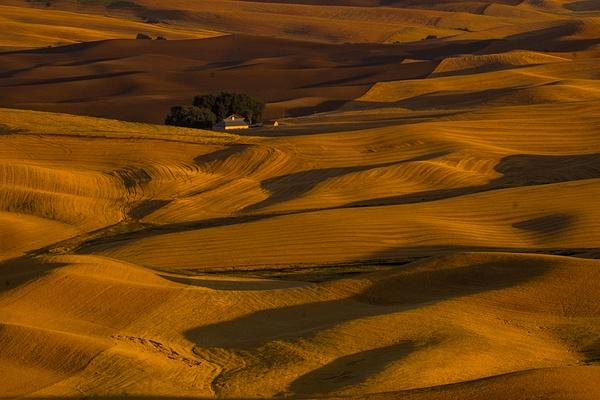 _DSF4989 - Palouse Harvest - Tony Sweet