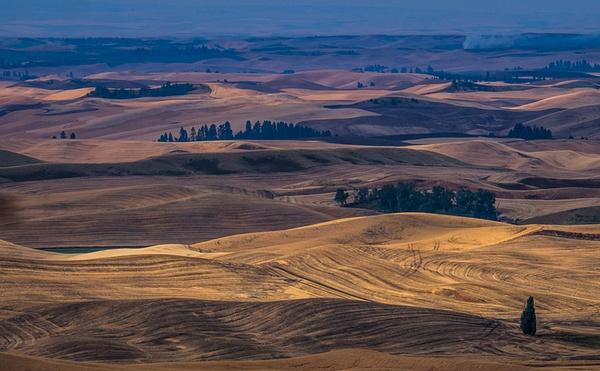 _DSF5609-Edit - Palouse Harvest - Tony Sweet