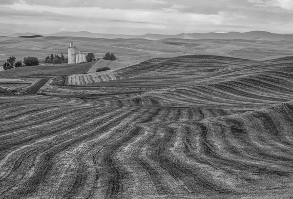 _DSF5945-Edit - Palouse Harvest - Tony Sweet