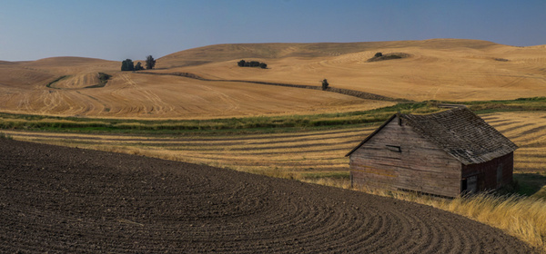 [Group 0]-_DSF5155__DSF5159-5 images - Palouse Harvest - Tony Sweet