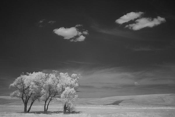 DSCF3385-Edit - Palouse Harvest - Tony Sweet