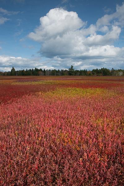 _DSC9980-Edit - Acadia NP, Maine - Tony Sweet