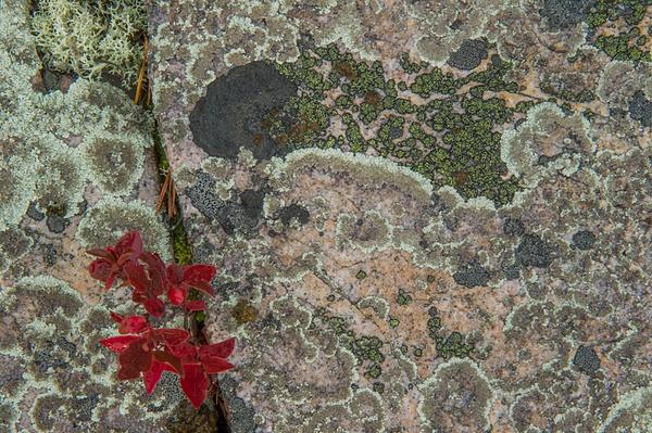 _DSC2881 - Acadia NP, Maine - Tony Sweet