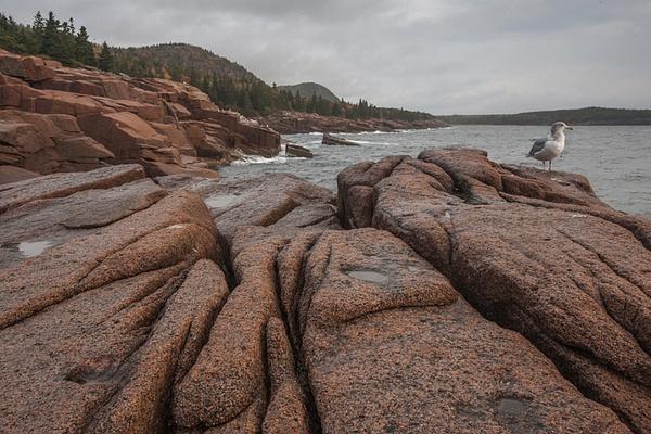 _DSC8520 - Acadia NP, Maine - Tony Sweet
