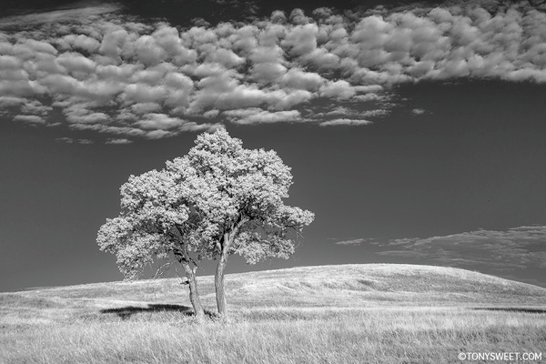 NE Road tree - Badlands NP, SD - Tony Sweet
