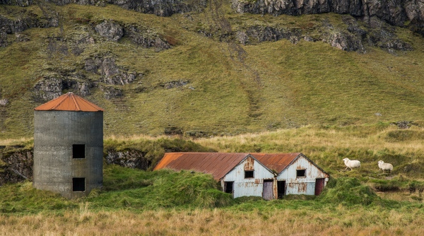 sheep and old farm - Iceland Sept. 2016 - Tony Sweet