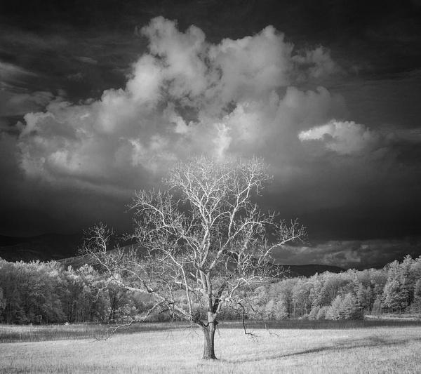 _DSC8456-Edit - Infrared 2 - Tony Sweet