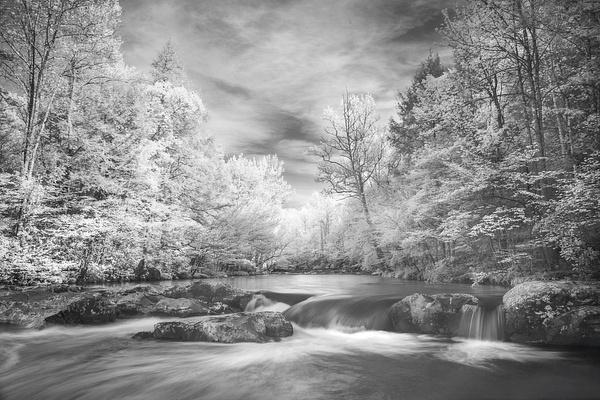_DSC8771-Edit - Infrared 2 - Tony Sweet