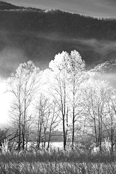 _DSC8847-Edit - Infrared 2 - Tony Sweet