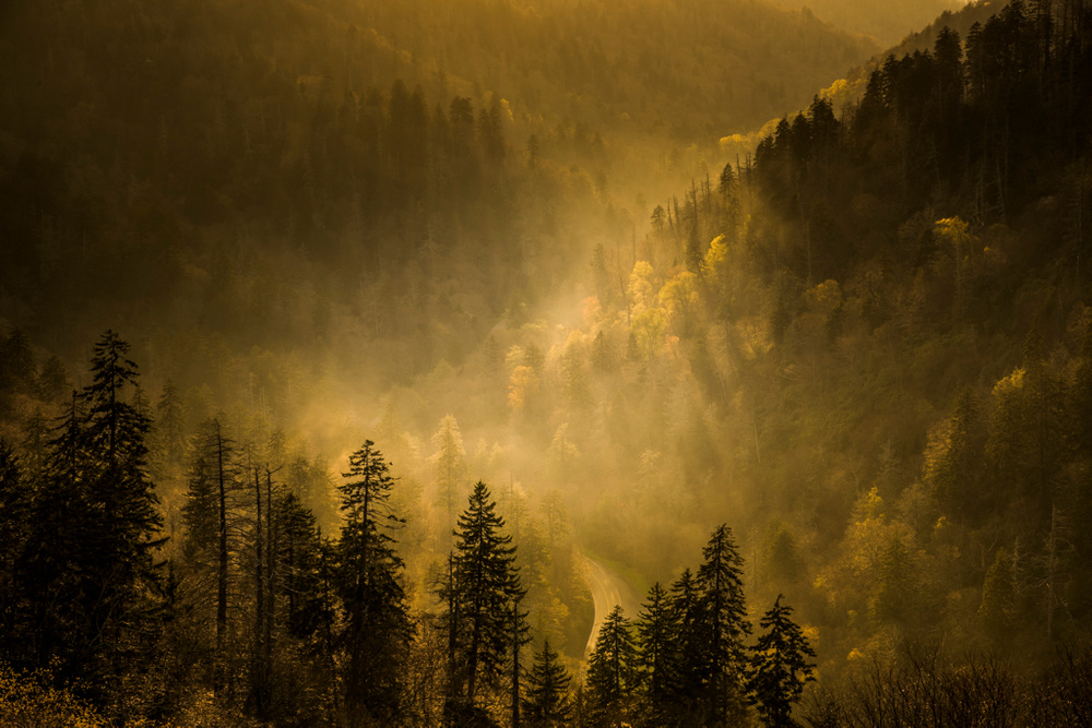 Morton Overlook light