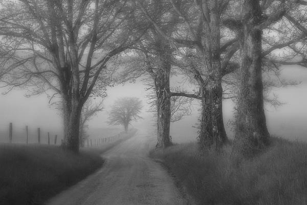 Tree frame on Hyatt Lane - Great Smoky Mountains, TN - Tony Sweet