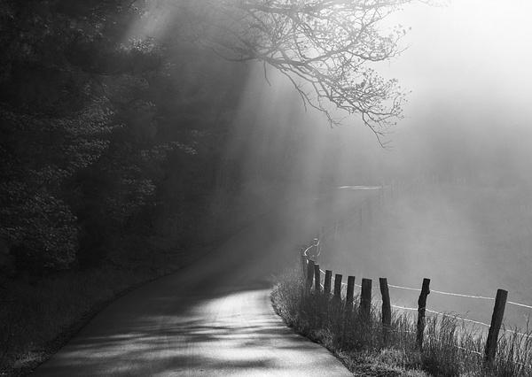 Dawn mist - Great Smoky Mountains, TN - Tony Sweet