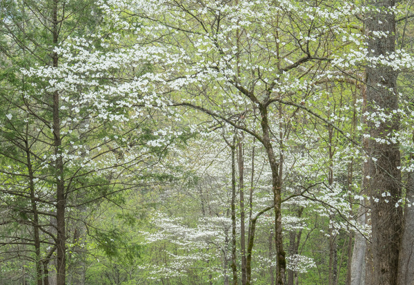 Early spring - Great Smoky Mountains, TN - Tony Sweet