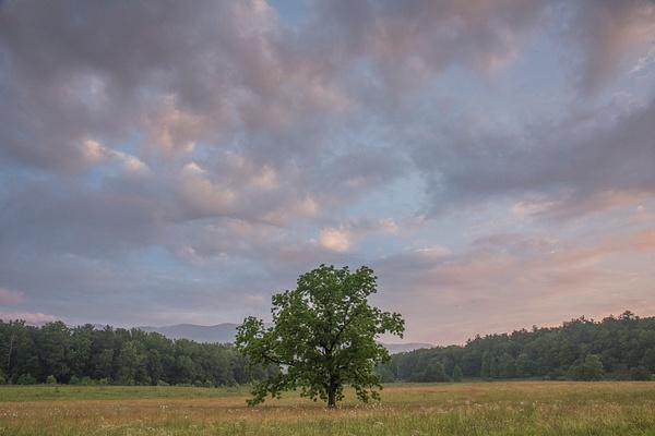 Milestone Tree dusk - Great Smoky Mountains, TN - Tony Sweet