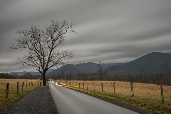 Sentinel Tree - Great Smoky Mountains, TN - Tony Sweet