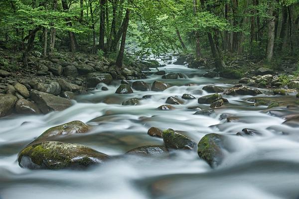 Convergence - Great Smoky Mountains, TN - Tony Sweet